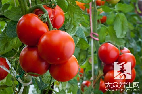 西红柿煮方便面的做法步骤是什么?